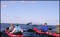 HPS - Whale Watching Tours